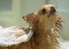 愛犬用洗面化粧台